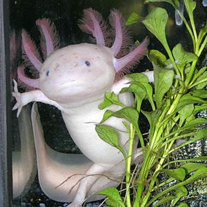 gli animali più strani del mondo
