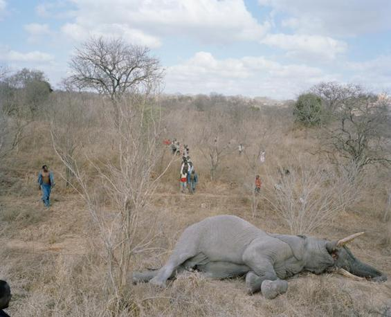 http://images.corriereobjects.it/gallery/Cronache/2010/03_Marzo/elefante/1/img_1/02_Elephant_Story-Copyright_David_Chancellor_672-458_resize.jpg