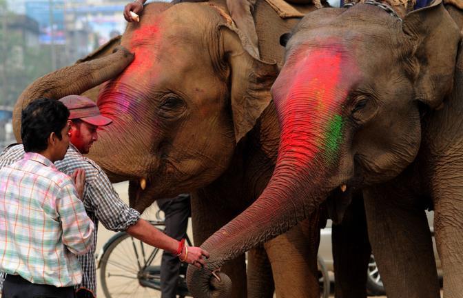 Anche gli elefanti vengono colorati a Guwahati, in India (Epa)